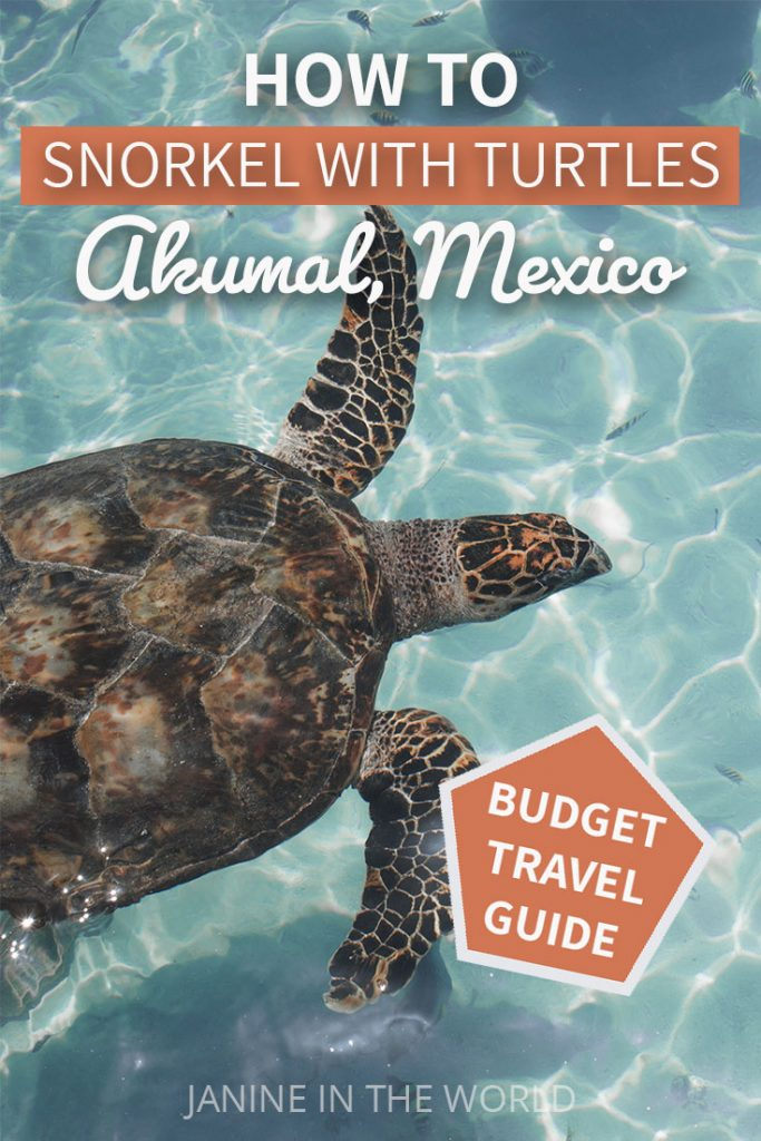 how to swim with turtles in akumal