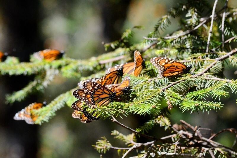 Piedra Herrada Butterfly Sanctuary